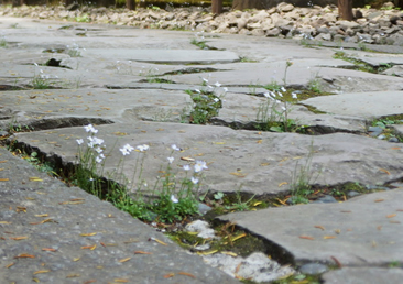 石畳に花を添えた新感覚の和風ガーデン。