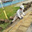 堤防の張芝工事をおこなっています。