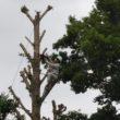 学校敷地内の樹木を伐採しました。