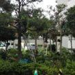 マンション敷地内の樹木剪定