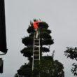 寺院境内の樹木剪定
