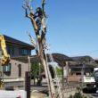 個人宅の庭木伐採