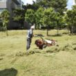 集合住宅敷地内の除草